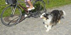 Radeln mit Hund ist strafbar – und kostet viel Geld
