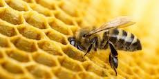 """Honig ist Bienenspucke""– 10 Fakten über Bienen"