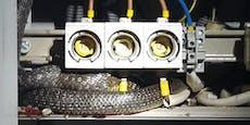 Schlange in Stromkasten sorgt für Blackout in Wohnhaus