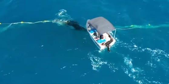 """Zuerst Wal-Baby gerettet, dann Ärger mit den Behörden: Der Australier """"Django"""" hatte einen turbulenten Dienstag"""