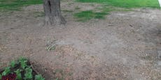 """Fotos zeigen """"enorme Schäden"""" in Linzer Park"""