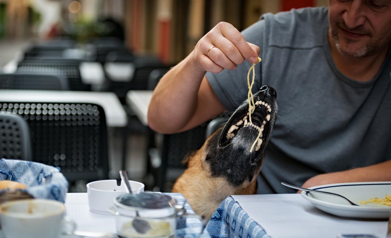 Damit solltest du deinen Hund nicht füttern