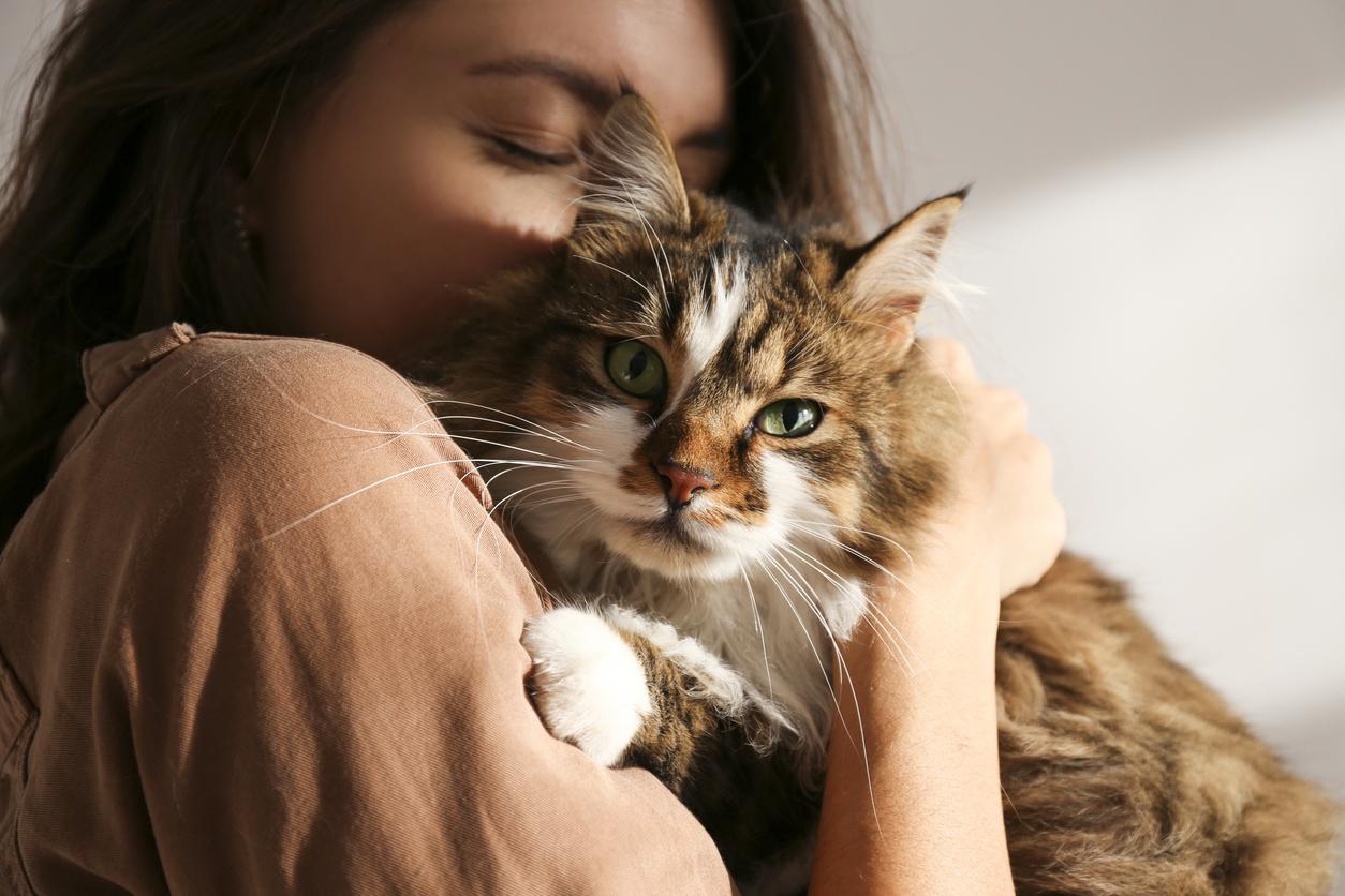 6 Dinge, die Katzenhalter oft falsch machen