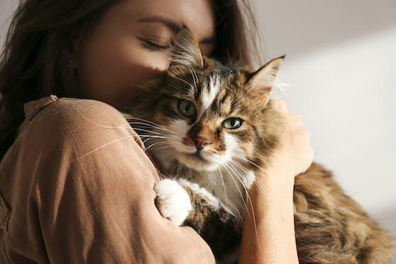 Katzen müssen auf Distanz gehen: Sie sollen nicht mehr frei in der Natur herumstreifen, sondern drinnen bleiben, so die amerikanischen Centers for Disease Control and Prevention.