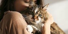 Menschen übertragen Coronavirus auf ihre Haustiere