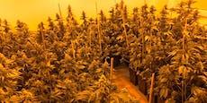 Polizei hebt Wiener Drogenring aus