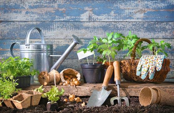 Gartenarbeit macht nicht nur Spaß, sondern hat auch Vorteile für die Gesundheit.
