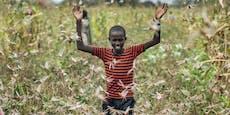 Schlimme Heuschreckenplage von Ostafrika bis Indien
