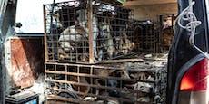 China verbietet Verkauf von Hundefleisch