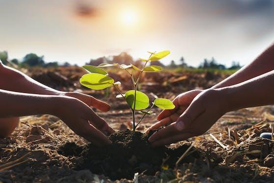 Einen Baum zu pflanzen ist eine Lebensentscheidung.