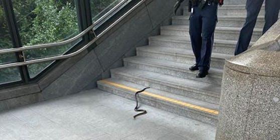 Die Schlange verirrte sich am Weg zur U-Bahn.