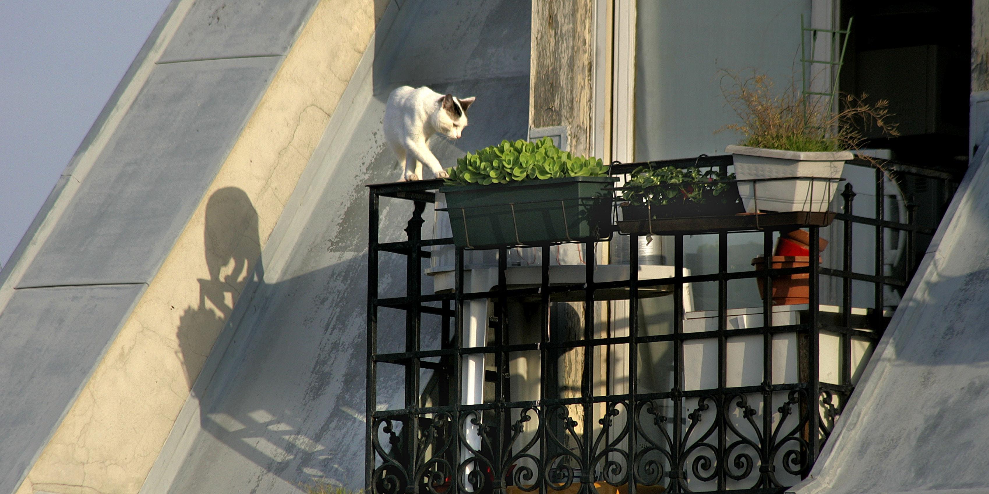 So machst du deinen Balkon katzensicher
