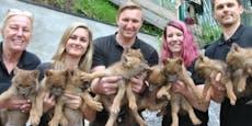 Sensation im Weißen Zoo: Alle neune bei den Rothunden