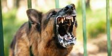 13-jähriger Camper von Schäferhund in den Kopf gebissen