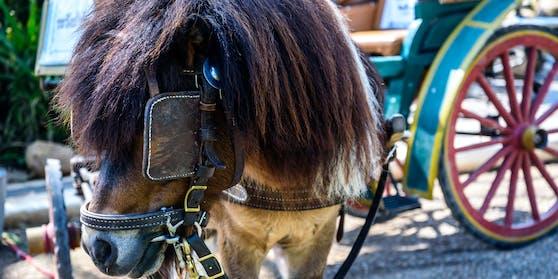 Ein Kutschengespann ist am Samstagvormittag im Bezirk Sankt Veit an der Glan durchgegangen.