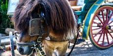 Ponys mit Kutsche gehen durch: Zwei Verletzte
