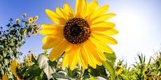 Diese Pflanzen können das Wetter vorhersagen