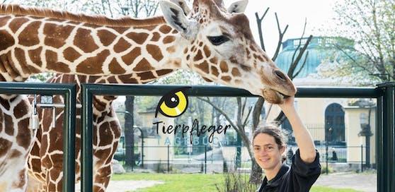 """Tierpfleger-Tagebuch aus Schönbrunn - nur hier bei """"HeuteTierisch"""""""