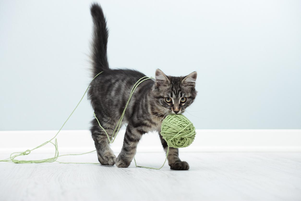 5 Dinge, die du bei Katzen nie machen solltest