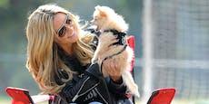 Heidi & Co: Das sind die Haustiere der Stars
