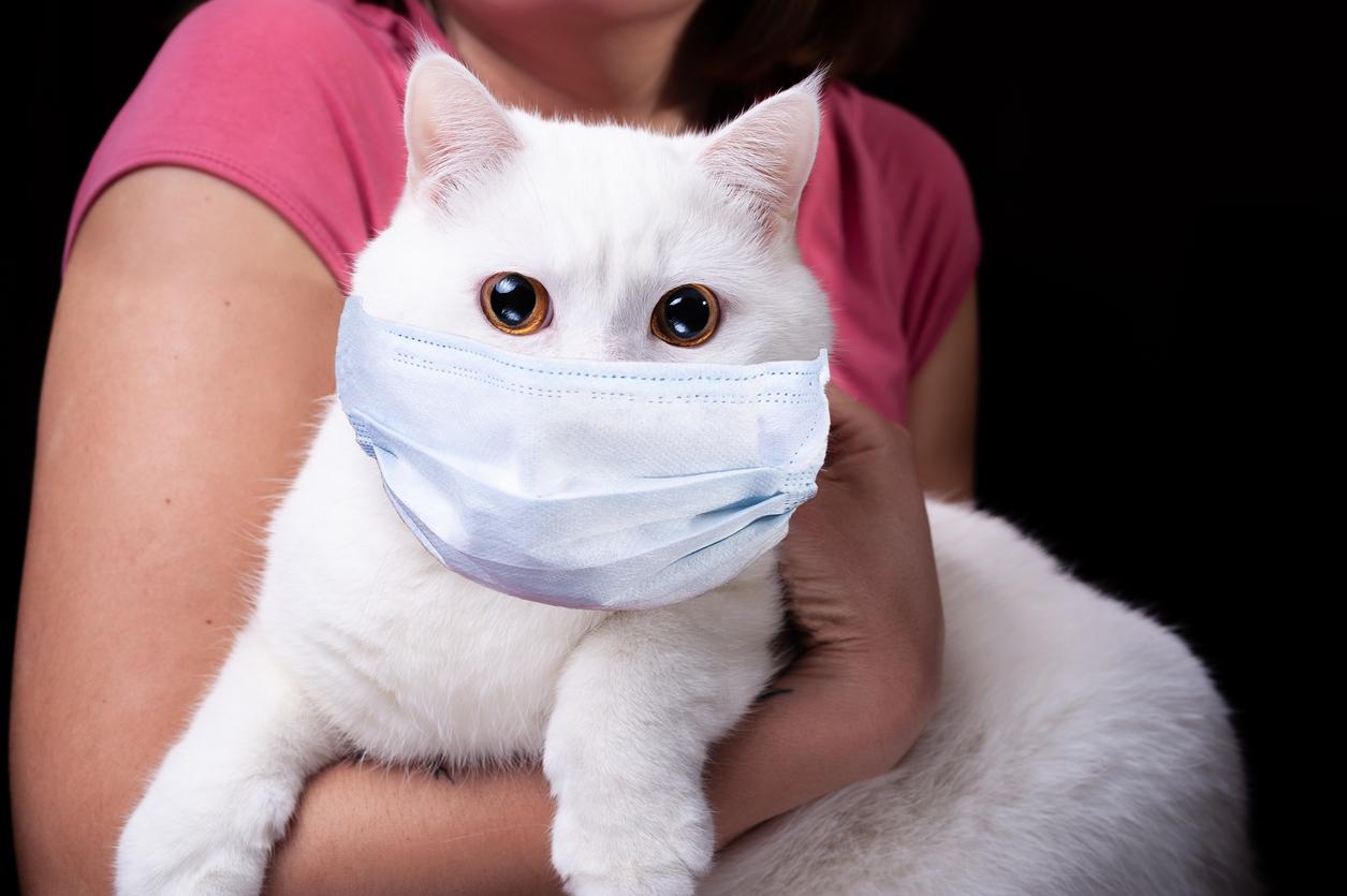 Meldepflicht für mit Corona infizierte Haustiere