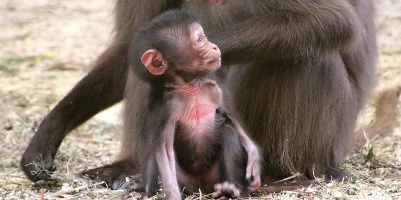 Entzückend! 30 Tierbabys im Tierpark Herberstein