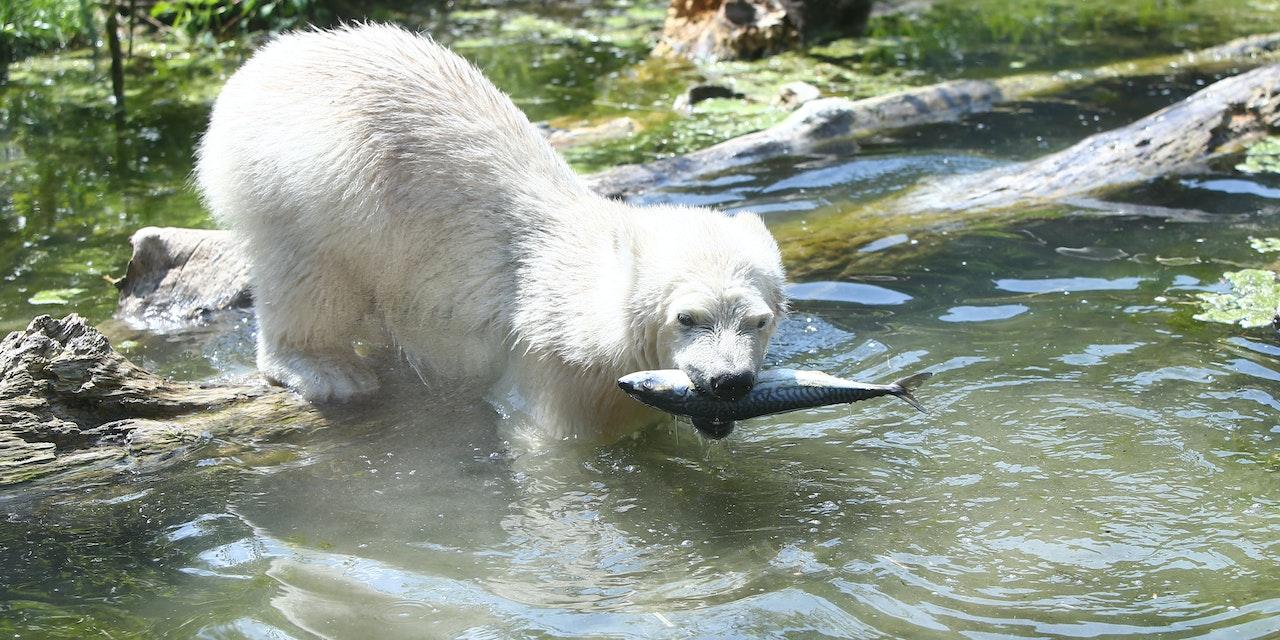 Fische Heute