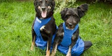 Frauerl tot – gelähmtes Hundeduo sucht Zuhause