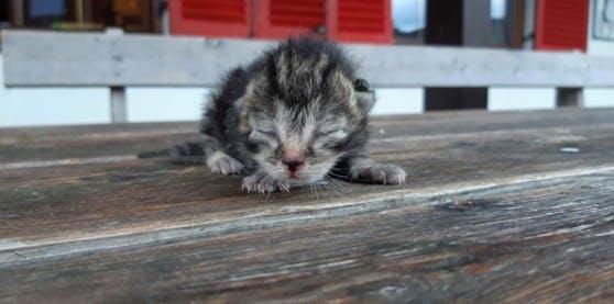 Der Tierschutzhof Lochen zeigt, wie gut sich gerettete Babykatzen erholen.