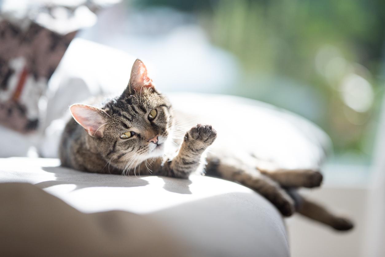 Gefährlicher Hitzschlag bei Katzen - 5 Anzeichen