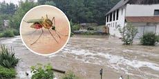 Nach Überflutungen droht jetzt Gelsen-Plage