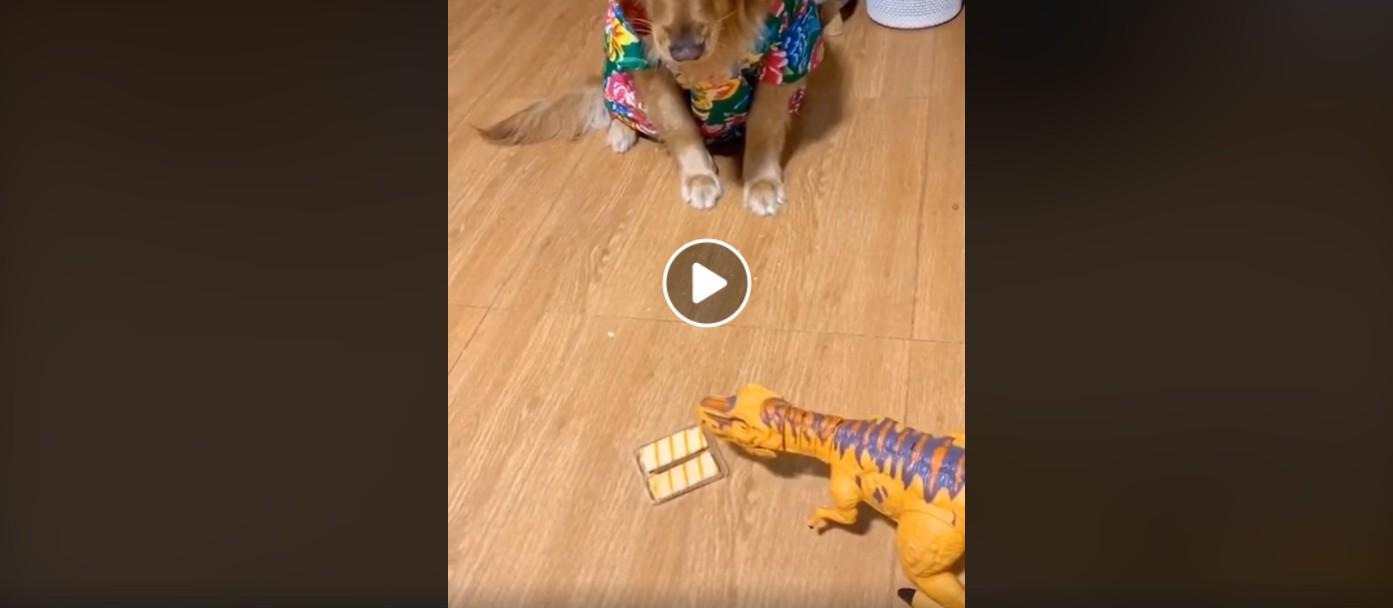 Dino-Trick bringt Retriever dazu, Essen auszuspucken