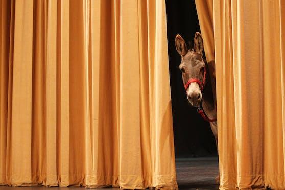 Der Vorhang für Bühnenkunst geht wieder auf.