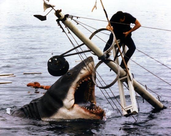 """Vor 45 Jahren kämpfte Roy Scheider in Spielbergs """"Der Weiße Hai"""" gegen das gefräßige Monster. Auch heute hat der Filmklassiker nichts von seiner Kraft eingebüßt."""
