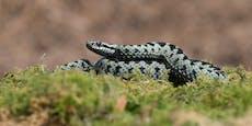 OÖ: Schlange beißt Bub (13), Mutter will Schadenersatz