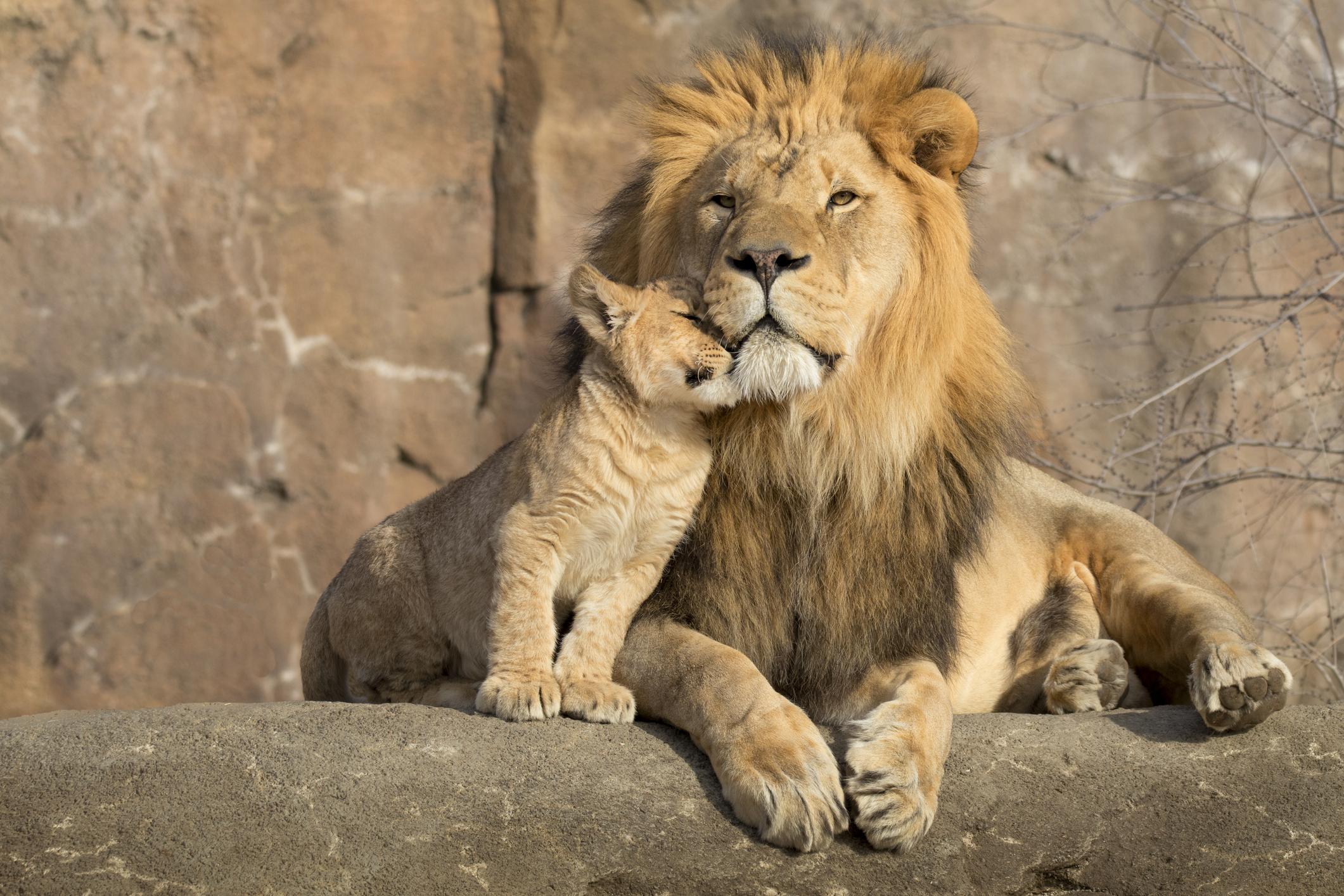 Herzige Momente! 10 Tier-Väter und ihre Kinder