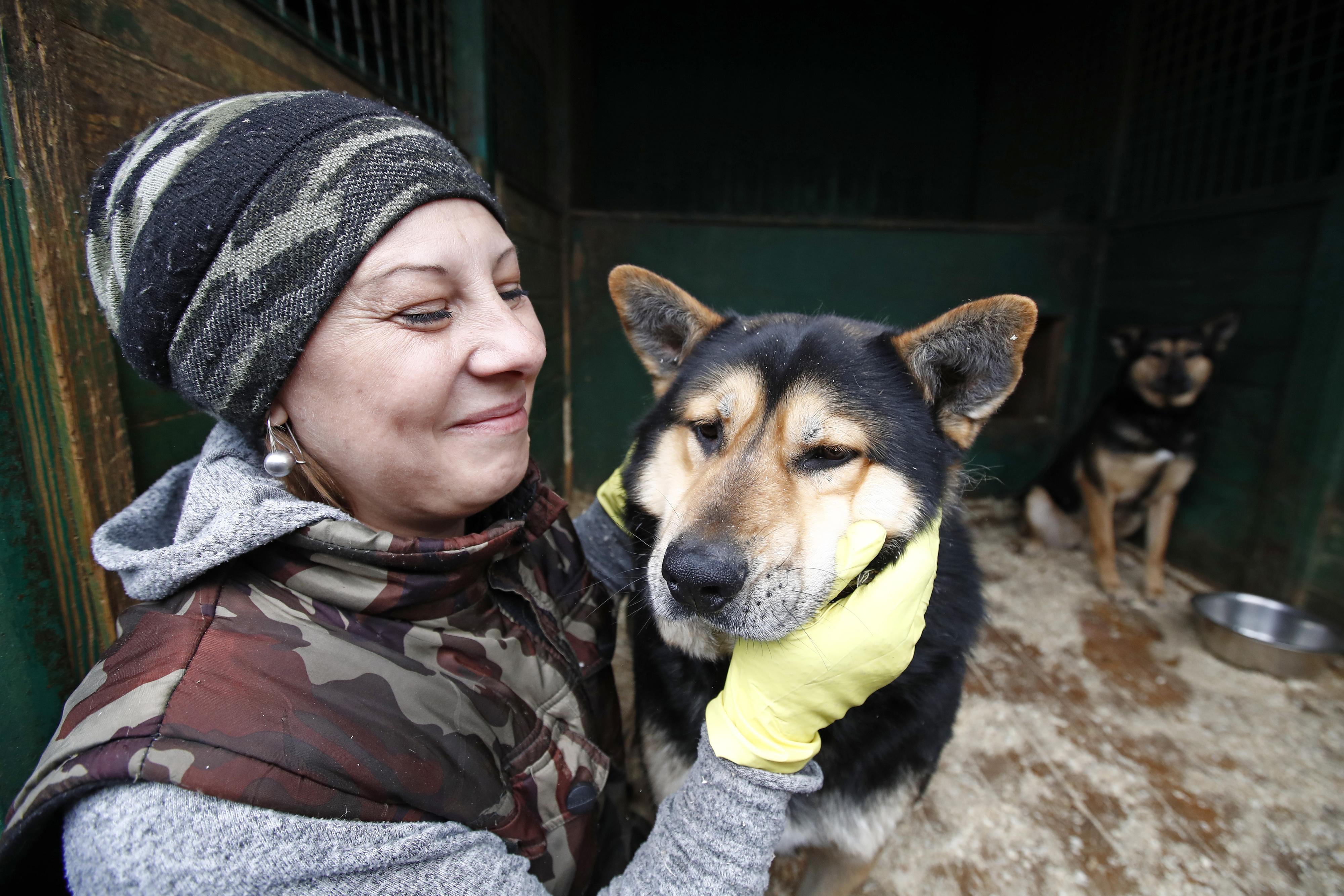 5 Mythen über Tierheim-Hunde, die nicht stimmen