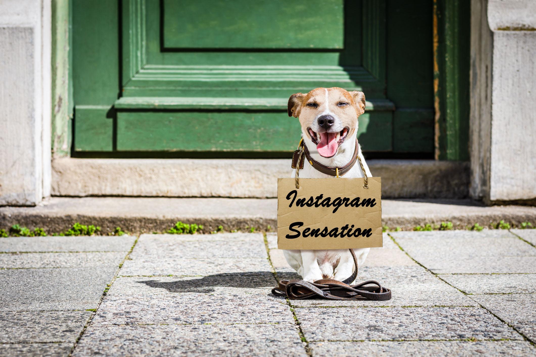 """Lustiger """"Hunde-Demonstrant"""" erobert das Internet"""