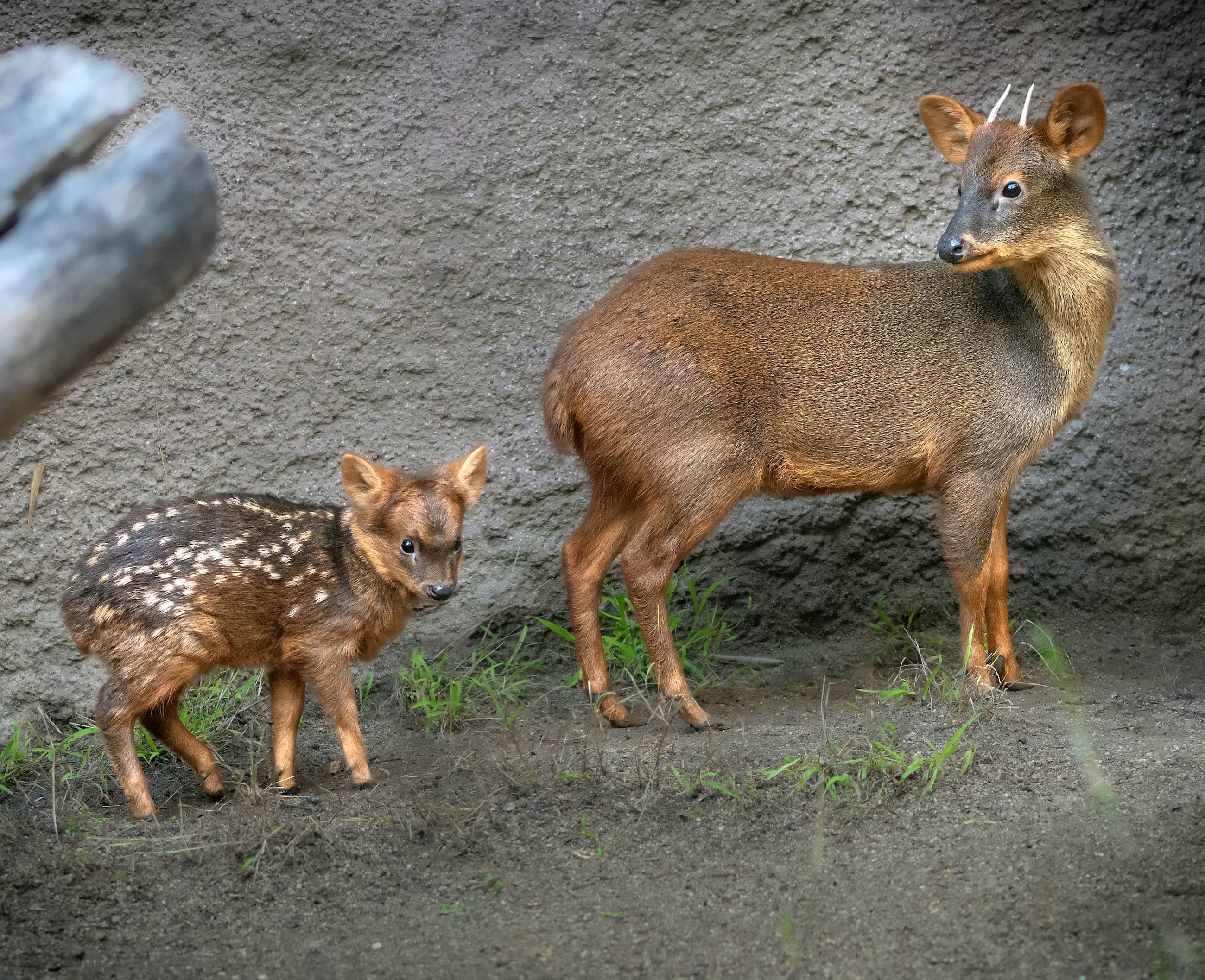 Groß und Klein: Irre, dass diese Tiere verwandt sind