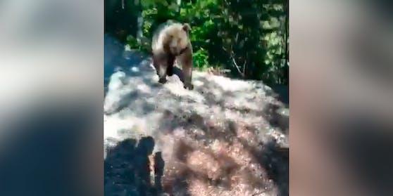 Bär verfolgt Südtiroler Wanderer auf Forstweg