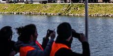 Corona-Alarm nach Migranten-Bootsfahrt auf der Donau