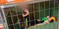 Familie hält Kleinkind in Ekel-Käfig gefangen
