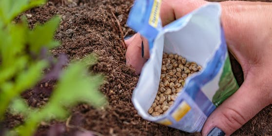Der Patent-Inhaber hat es in den Händen, wer wann wo welches geschützte Gemüse anbauen darf.
