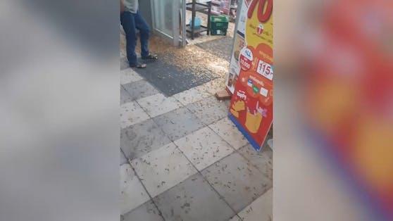 Die Insekten-Plage legte den Markt völlig lahm.