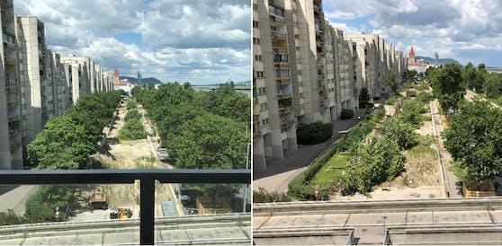 Die Bäume mussten wegen des Wohnbauprojektes gefällt werden.