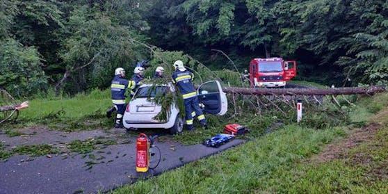 Die Fichte fiel auf ein fahrendes Auto.
