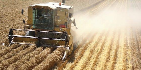 200.000 ha Weizen würden durch unseren verschwenderischen Umgang direkt in die Mülltonne wandern, klagt der KBVÖ