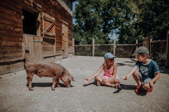 Beim Sommercamp am Landgut Cobenzl nehmen maximal 15 Kinder teil.