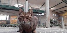 RIP Lilly: Berühmte Schönbrunner Mäusejägerin gestorben
