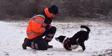 So wird aus einem Welpen ein richtiger Rettungshund